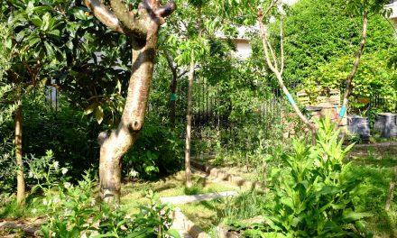 Jardiner au rythme de la nature – 3 juin, 14 octobre 2019 puis février et mars 2020